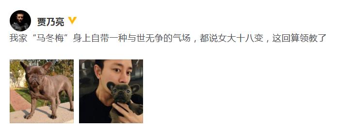 贾乃亮自曝爱犬名叫马冬梅 自带与世无争强大气场