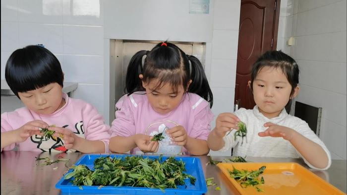 珍視自然資源,豐富田園課程——濟南市天橋區大橋中心幼兒園開展尋覓野菜探究活動