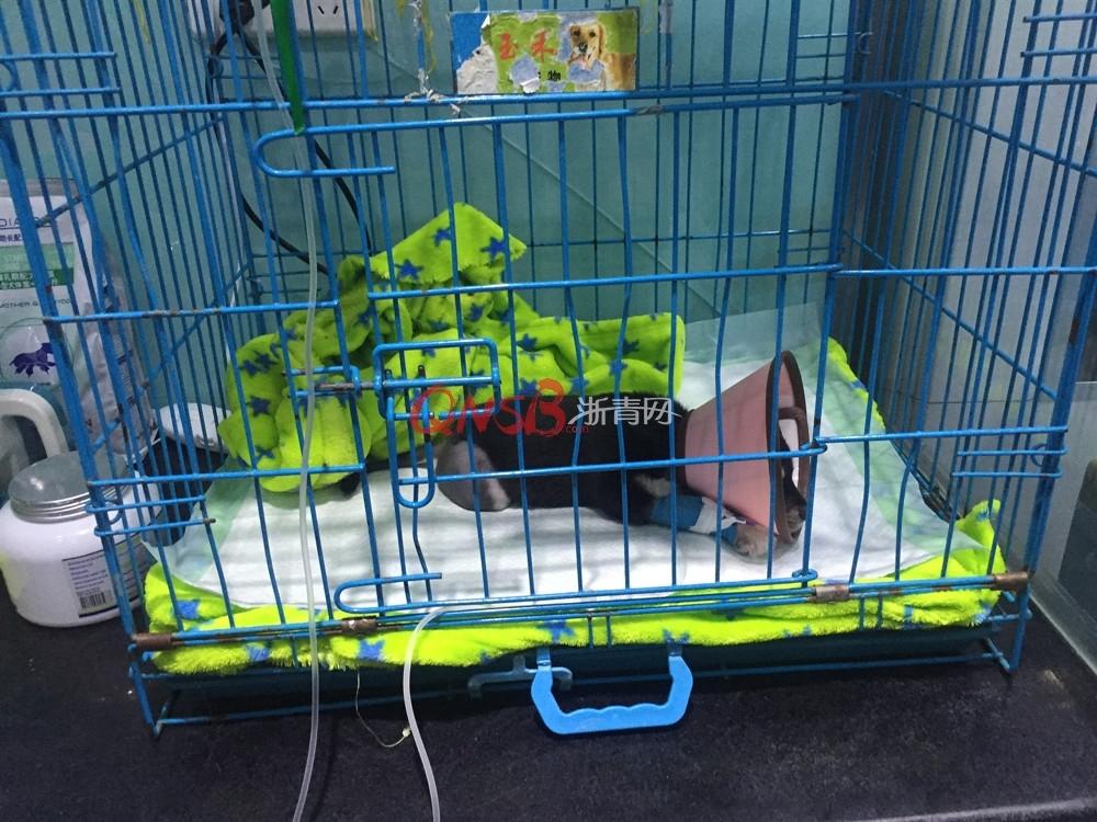杭州一居民楼天台疑似发生虐狗虐猫事件 有多条猫狗遇害