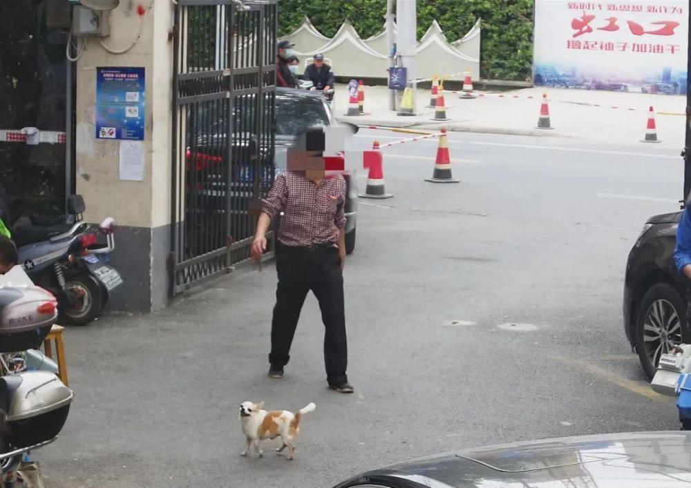 利用电子警察取证!上海不牵绳遛狗将被抓拍处罚,已抓拍处罚20多起