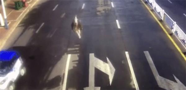 鸵鸟趁主人不注意逃上街头狂奔 网友:一只向往自由的大宠物