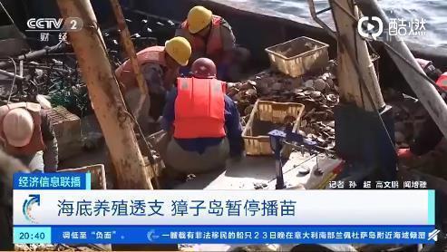 獐子岛已暂停播苗,捕捞船出现闲置变卖