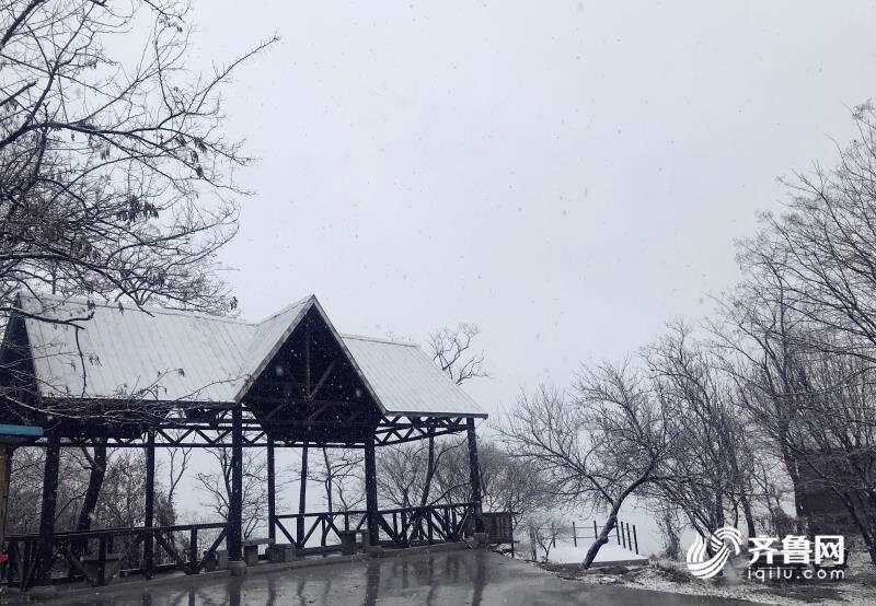 组图|官宣!山东迎来今冬第一场雪