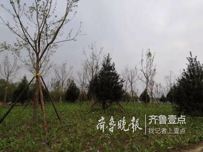 黄河公园?#40644;?#26377;消息了:已开工,4月底完成苗木种植