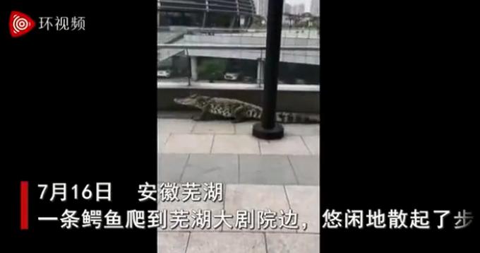 男子带鳄鱼遛弯吓坏了不少过路群众,警方:不听劝已罚500