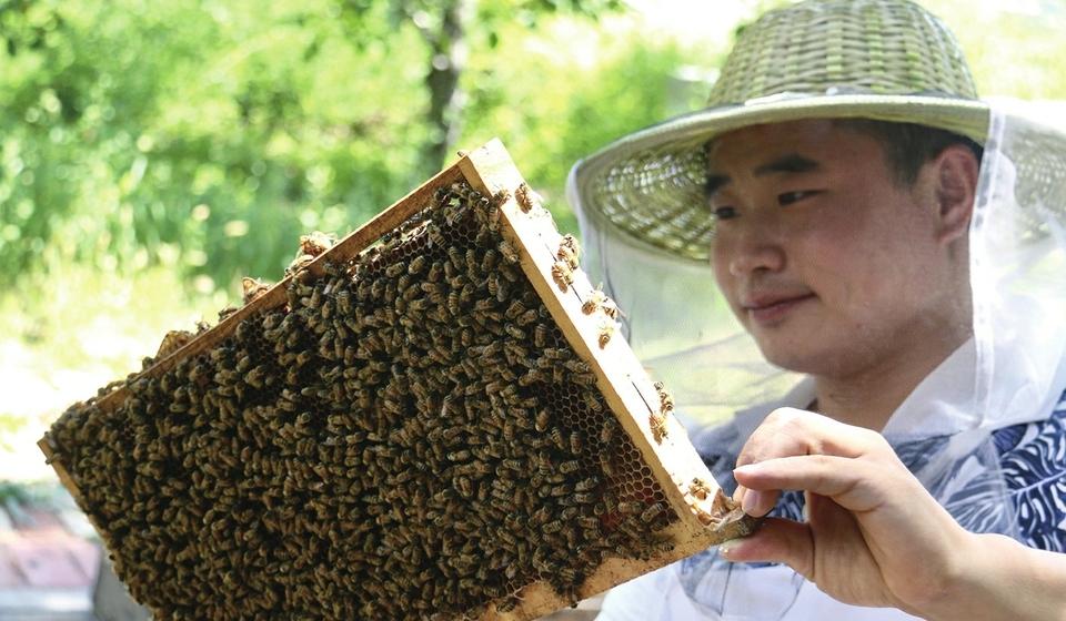 """90后小伙告退养蜂 一年被蜇几百次仍喜这耳旁""""蜂"""""""
