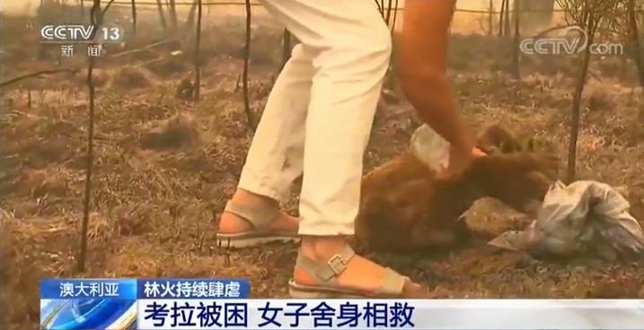 澳大利亚林火持续肆虐:一只考拉被困 好心女子舍身相救