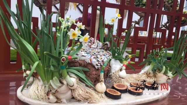 天下第一泉风景区第六届迎新春花卉展开幕啦!多姿水仙等您来赏