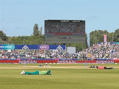 板球世界杯遭群蜂突袭 球员抱头护脸寻藏身处