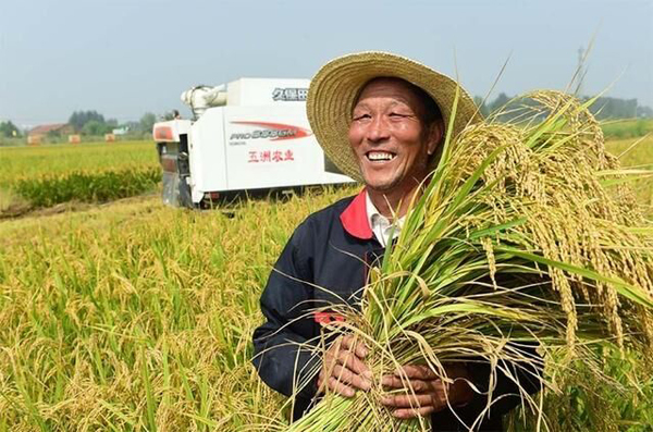 济南吴家堡黄河大米被评为全国名特优新农产品