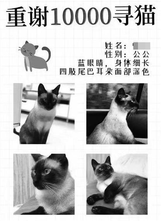 女子悬赏万元寻猫,找到后却不给钱?还有人在微信群教她作假