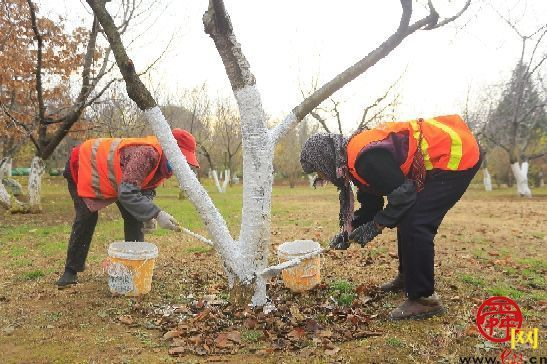 防虫防寒 济南植物园开展植物涂白工作