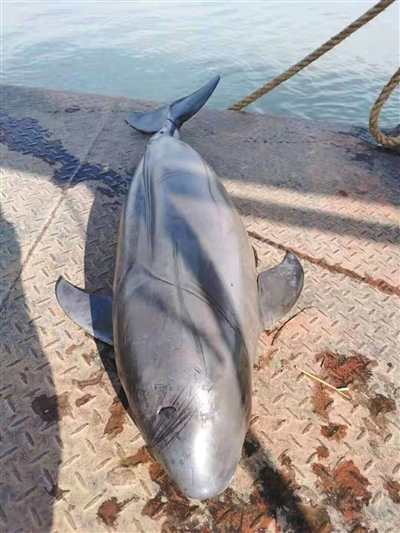 长江流域湘鄂段一周内两头江豚死亡