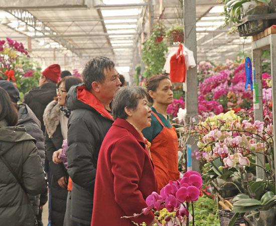 """家有""""枯桃""""一盆花!岛城花卉市场开启""""春节模式"""""""