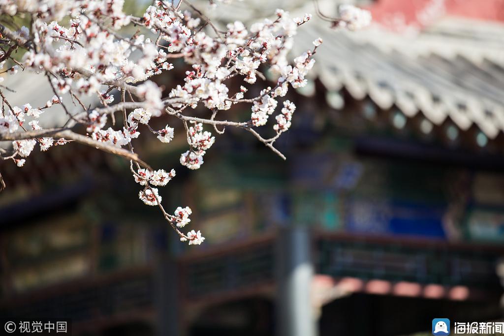 大明湖花开春日景色迷人 市民出游踏青享暖阳