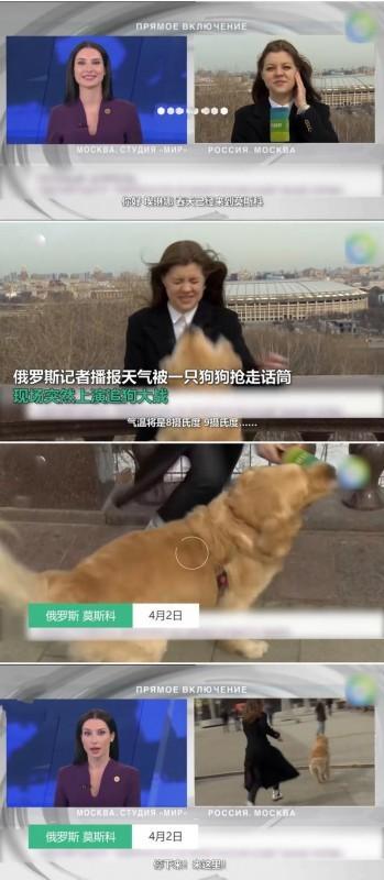 被逗笑了!記者直播時被狗狗搶走話筒 隨后開始追狗大戰