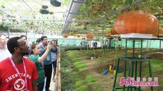 新华社:沂蒙老区正着力打造新时代乡村振兴齐鲁样板