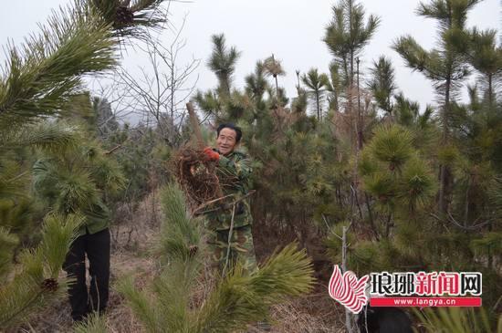 临沂护林员李万成:护林护鸟 为后代留下一片绿