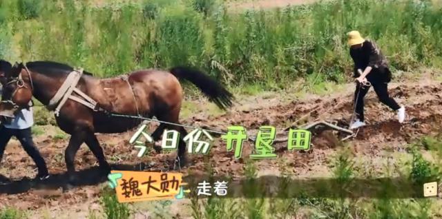 《做家务的夫君》魏大勋开荒犁地 网友:看他干农活分外搞笑!