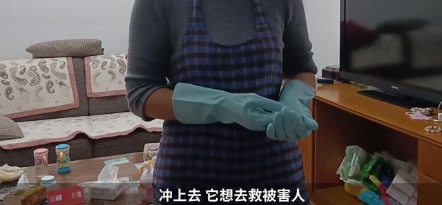 上海杀妻焚尸案爱犬救主冲入火海 网友感叹真的是人不如狗