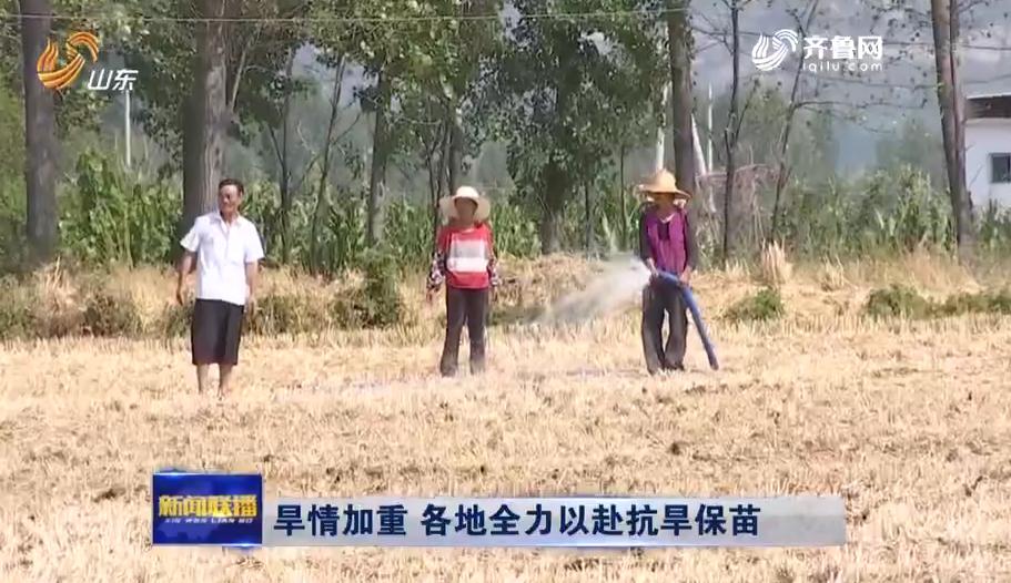 山东降水较常年偏少37% 全省投入9.7亿元抗旱保苗