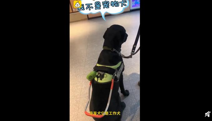 女子带导盲犬进海底捞被拒,店长已道歉,网友有不同意见
