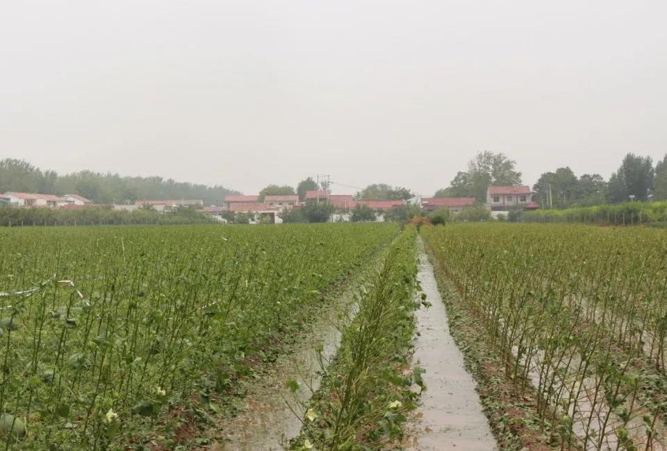 金乡县遭冰雹袭击 部分地区农作物受灾严重
