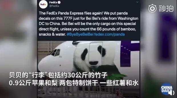 操碎了心!大熊猫贝贝回国 听不懂中文(四川话)咋办?