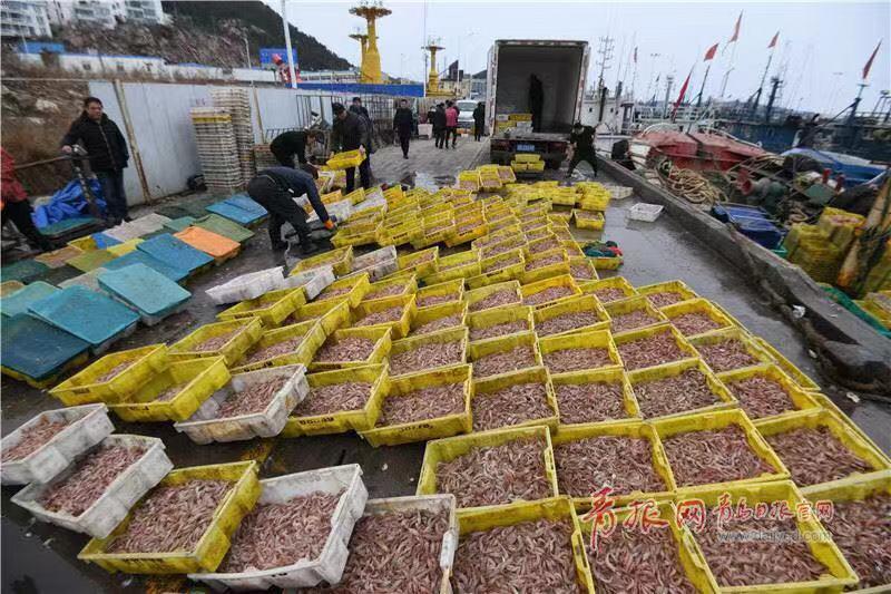 壮不雅!青岛渔平易近大年夜丰产 船埠鱼虾铺满地