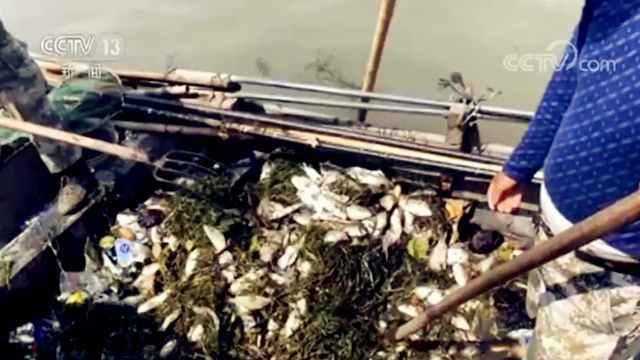"""【央视关注】景区湖边惊现大量死鱼 放的真的是""""生""""吗?"""
