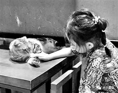 在萌宠餐厅 陪娃消磨暑期小时光