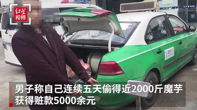 奇葩!绵阳北川县一男子为打赏女主播偷2000斤魔芋