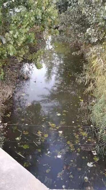 【啄木鸟在行动】槐荫区美里湖街道邱庄排水沟污染明显