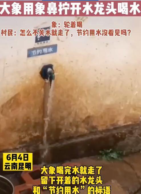 云南象群进村民家拧开水龙头喝水 网友:太聪明了