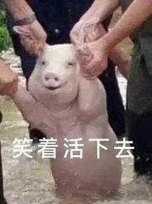 校庆为母校急救10头猪,网友笑称:而今捐猪比捐钱豪阔