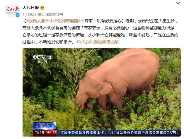 云南大象会不会吃到毒蘑菇?具体啥情况?事件详情!