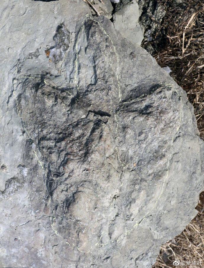 陕西延安发现侏罗纪肉食龙足迹