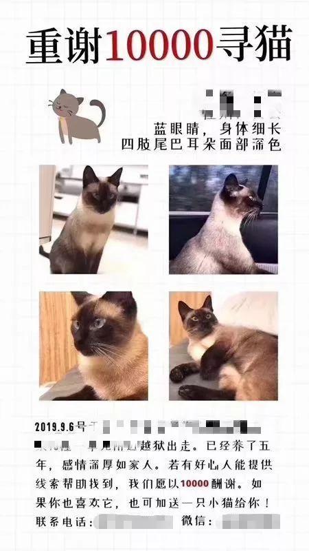 重赏10000元寻猫!猫找到了,但接下来的故事却让小区炸锅……