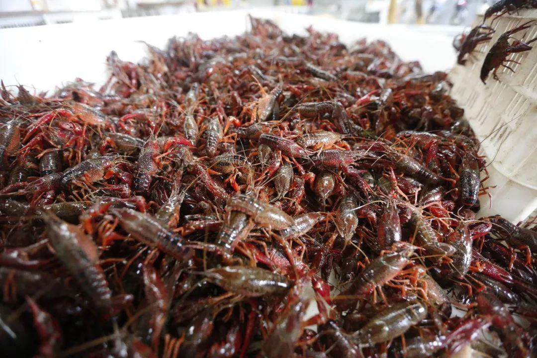 小龙虾价格降幅超过35%!网友:夜宵安排一下