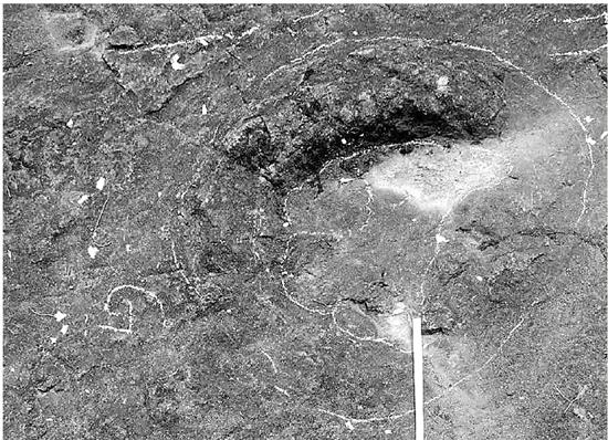 兰溪发现一亿年前恐龙脚印 可被当地村民填了