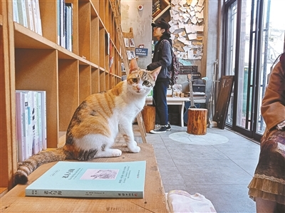 """12平方米24小时无人书店 三只猫当""""掌柜"""""""