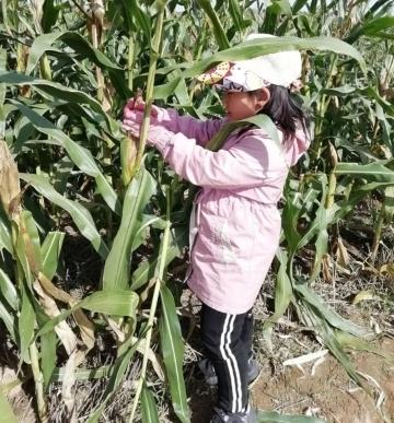 """和面、锄地、掰玉米 历城区万象新天学校师生这样迎接""""世界粮食日"""""""