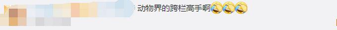 南京一野猪窜进奶茶店吓坏女店员,网友评论:动物界的跨栏高手
