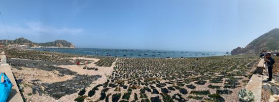 【我爱这片蓝色的国土】大钦岛,一座海带出口加工基地