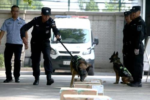 中国警犬又添新技能 可搜索新型...