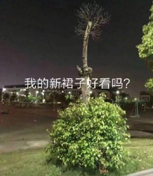 """泰州学院一棵树的""""假发""""掉了 网友:这年头连树都秃头了"""