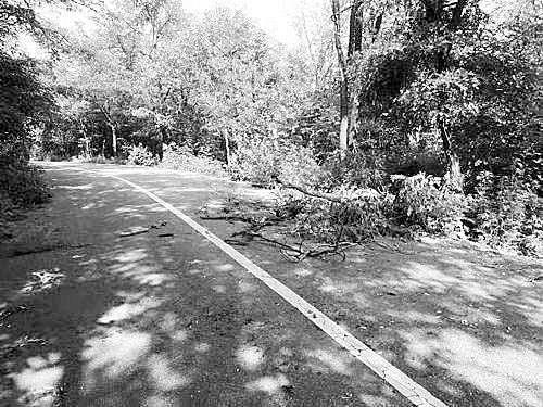 大树挡路引发变乱致男子殒命 怙恃诉讼九年末获赔