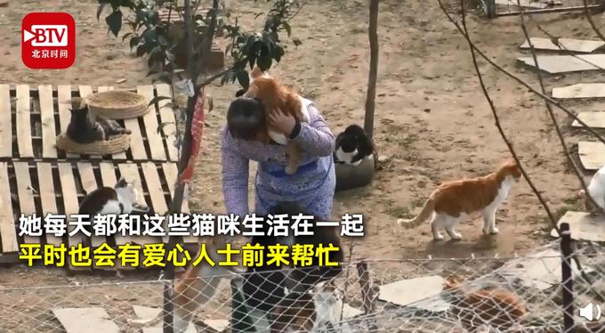女大学生毕业后收养100多只流浪猫:过年不回家,和它们在一起