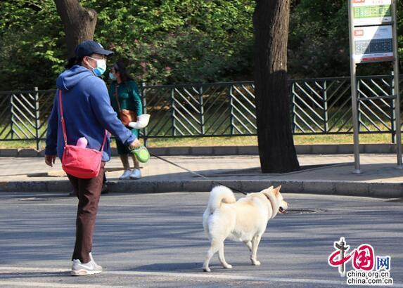 5月新规来了:外出遛狗须拴绳、网络直播要纳税、不合新规短期健康险停售