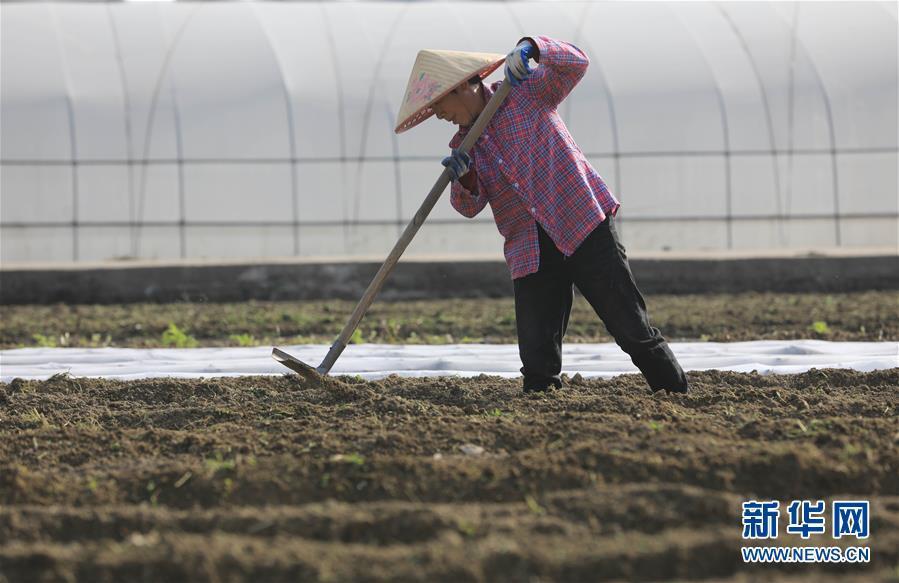 春分时节,农民在忙啥?